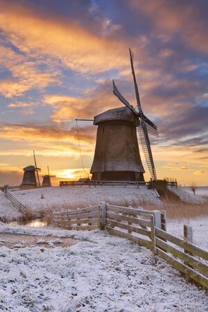 schermerhorn: Traditional Dutch windmills on a beautiful winter morning at sunrise.