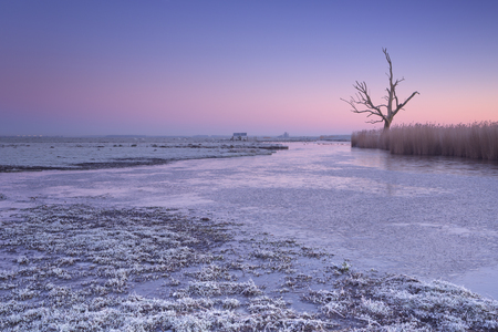 Winter in a Dutch polder landscape with a lonely tree at dawn.