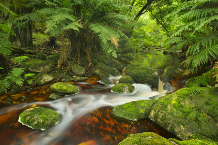 Red river through lush temperate rainforest in the Garden Route National Park in South Africa. Reklamní fotografie - 70342258