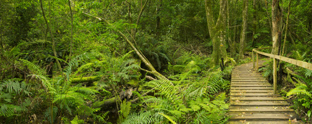 A path through lush temperate rainforest in the Tsitsikamma section of the Garden Route National Park in South Africa. Imagens