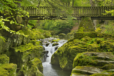 mourne: Wooden bridge over the Shimna River in Tollymore Forest Park in Northern Ireland.