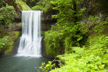 silver fern: The Lower South Falls in the Silver Falls State Park, Oregon, USA. Stock Photo