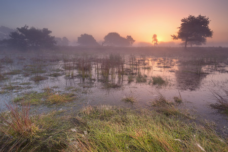 Sunrise over the wetland of the Leersumse Veld in The Netherlands.