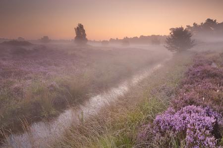 피 헤더는 일출 안개가 아침에 네덜란드에서 촬영.