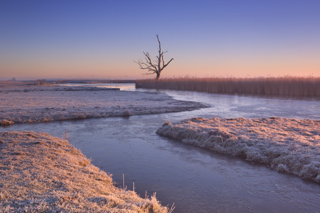 Winter in a Dutch polder landscape with a lonely tree at sunrise.