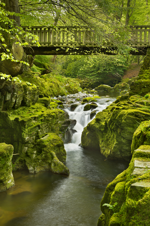 Wooden bridge over the Shimna River in Tollymore Forest Park in Northern Ireland.