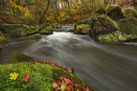 River through an autumn forest near Irrel in Germany. Reklamní fotografie