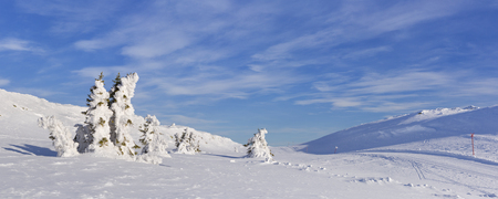 Frozen trees in a snowy winter landscape in Trysil, Norway. Photographed on a sunny day.