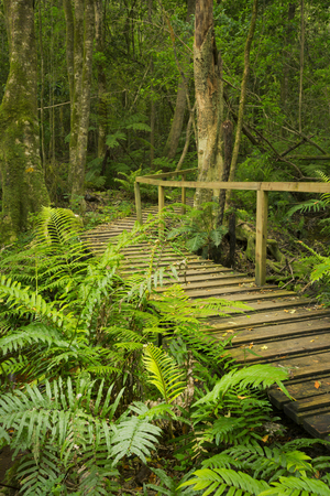 A path through lush temperate rainforest in the Tsitsikamma section of the Garden Route National Park in South Africa. Reklamní fotografie