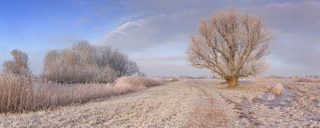 A frozen landscape just north of Amsterdam in The Netherlands photographed in early morning sunlight.