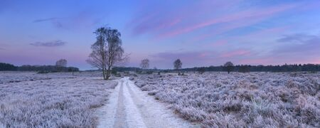 Path through frosted heather in winter, photographed just before sunrise near Hilversum in The Netherlands.