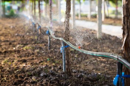 irrigate: Water springer in the vineyard garden