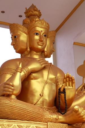 Brahma golden looking photo