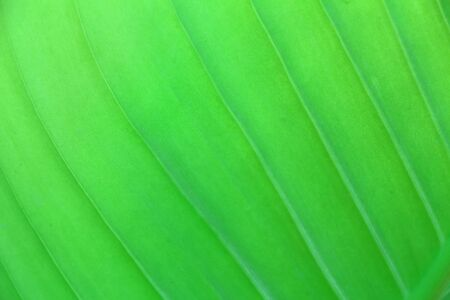Green leaf in the garden photo