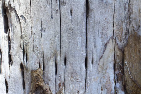 detail: Wood detail