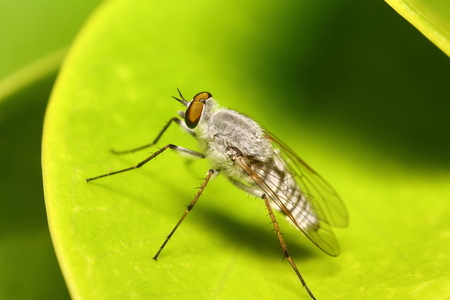 Small insect photo