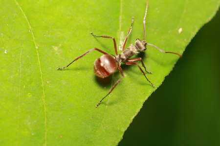 green: Small insect and bug in the garden ,small spider animal