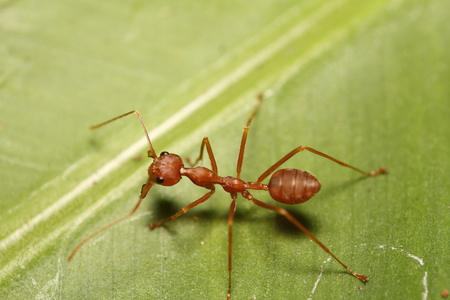 antrey: Small ant working in the green garden Stock Photo