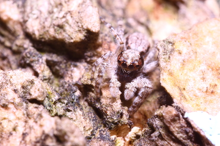 dick: Jump spider on tree in the garden Thailand
