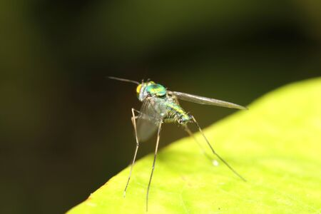 grass close up: small insect in the green garden Thailand Stock Photo
