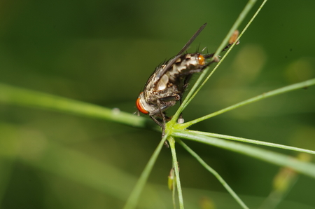 hairy legs: Fly insect in the green garden