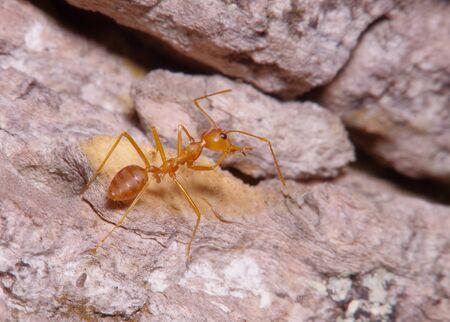 hormiga hoja: Peque�a hormiga en la hoja verde y el �rbol Foto de archivo