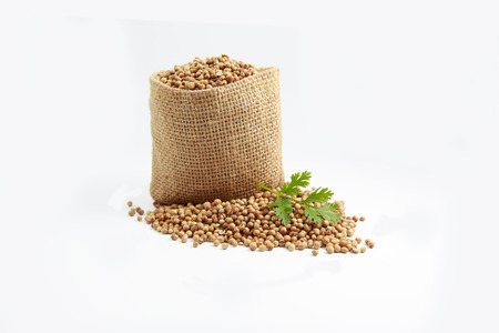 coriander seeds: coriander seeds Stock Photo