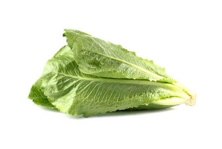 romaine: Cos Lettuce, Romaine Lettuce isolated on white background