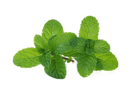 Fresh mint isolated on a white background. Stock Photo