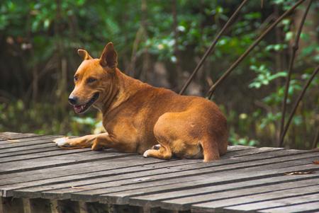 The dog is gape Stock Photo