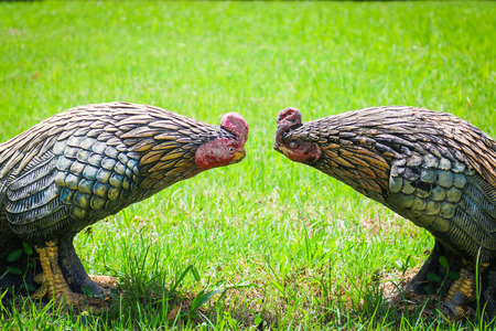 fighting cock: Statue chicken (fighting cock) on grass in temple Thailand. Stock Photo