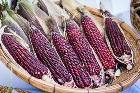 Purple waxy corn in basket on white background. Banco de Imagens - 72870912