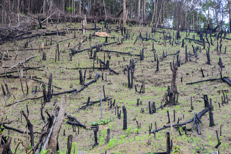 deforested: deforested The cultivation of rice by starvation. Stock Photo