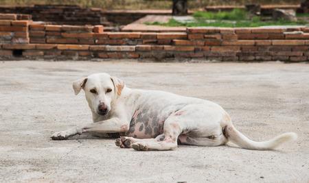thai stretch: Homeless dogs do sleep on the cement floor. Focus Page Dog.