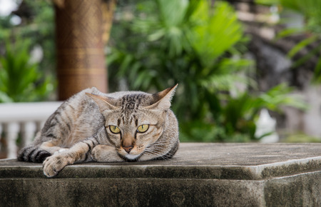 cement pole: Gray striped cat lying on concrete pillars. Focus on cat. Stock Photo