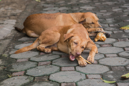 Two dogs eating bones, sleeping on concrete blocks.focus on face and legs.