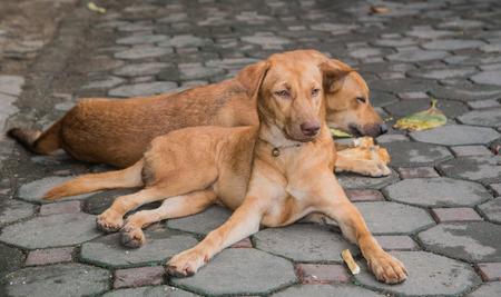 envisage: Two brown dog gnaw bone Concrete block.focus on dog front. Stock Photo