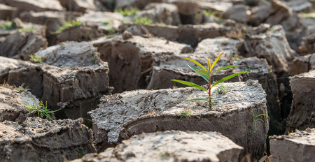 dry land: Cracked earth,Drought,Dry land,Young trees. focus on tree.