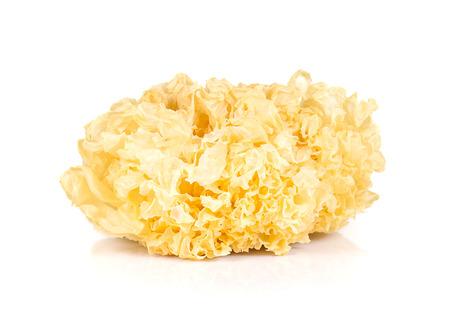 White Jelly Fungus isolated on white background. Stock Photo