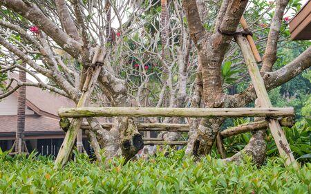 strut: Tree care , Pole tree new plant after.