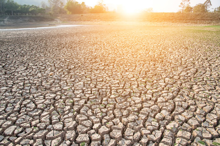 dry land: Cracked earth,Drought,Dry land,Dry tree,Dry Dam.Selective focus on Cracked earth.