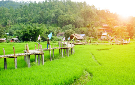 :Bamboo bridge over a cornfield in Banpambok Pai, Mae Hong Son, Thailand.