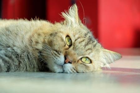 grey eyed: Cats sleeping on the floor, looking forward.