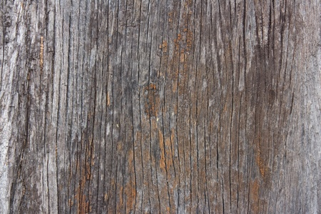 Old wood texture Stock Photo - 12076626
