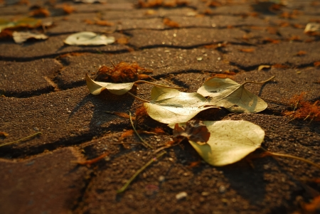 autumn leaves on brick road with light of sunset photo