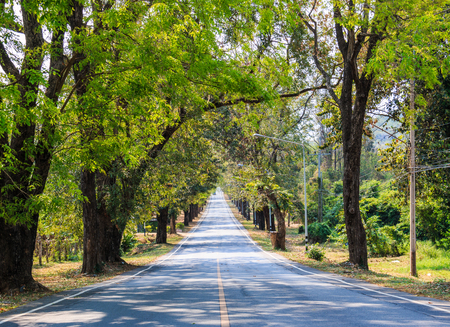 Road between the trees in Thailand photo