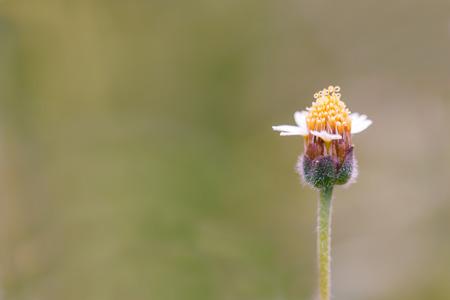 unwanted flora: Flower of grass in sunlight