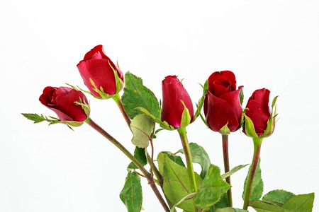 bouquet of red roses over white background Stock Photo