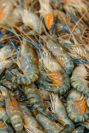 macrobrachium: giant freshwater prawn with eggs at Samaesarn market , Thailand Stock Photo