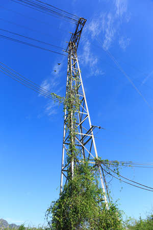 entanglement: electric pole standing on blue sky background with entanglement weed Stock Photo